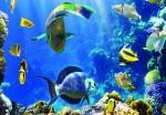коралловый риф 1500 руб