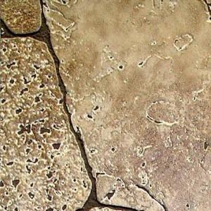 Панели листовые МДФ
