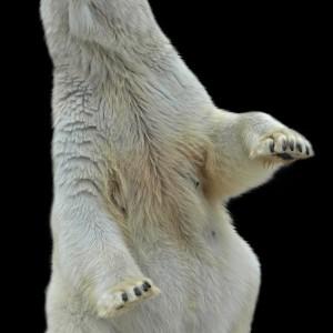 Фотообои Медведь