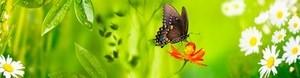 Кухонный фартук Бабочка