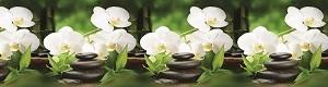Кухонный фартук АВС Белая орхидея